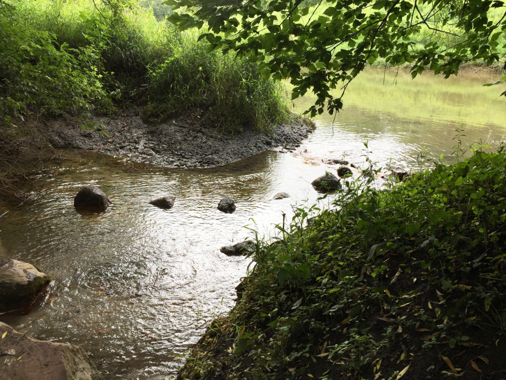 Turtle Creek Springs